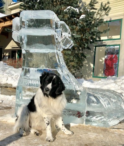 Therapy Dog Story Hour – Arts & Cultural Alliance of Freeport
