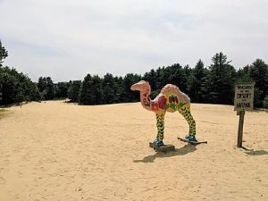Sandy the Camel on the dunes