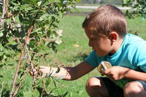 Picking Blueberries at Wolfe's Neck Center